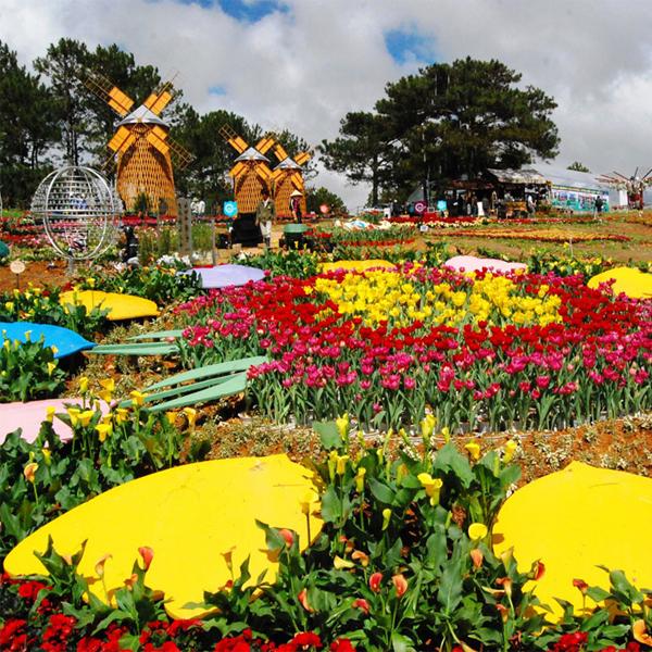 Tour du lịch Đà Lạt - Hoa Sơn Điền Trang - Làng Hoa Vạn Thành 3 ngày 3 đêm Thiên Việt Travel